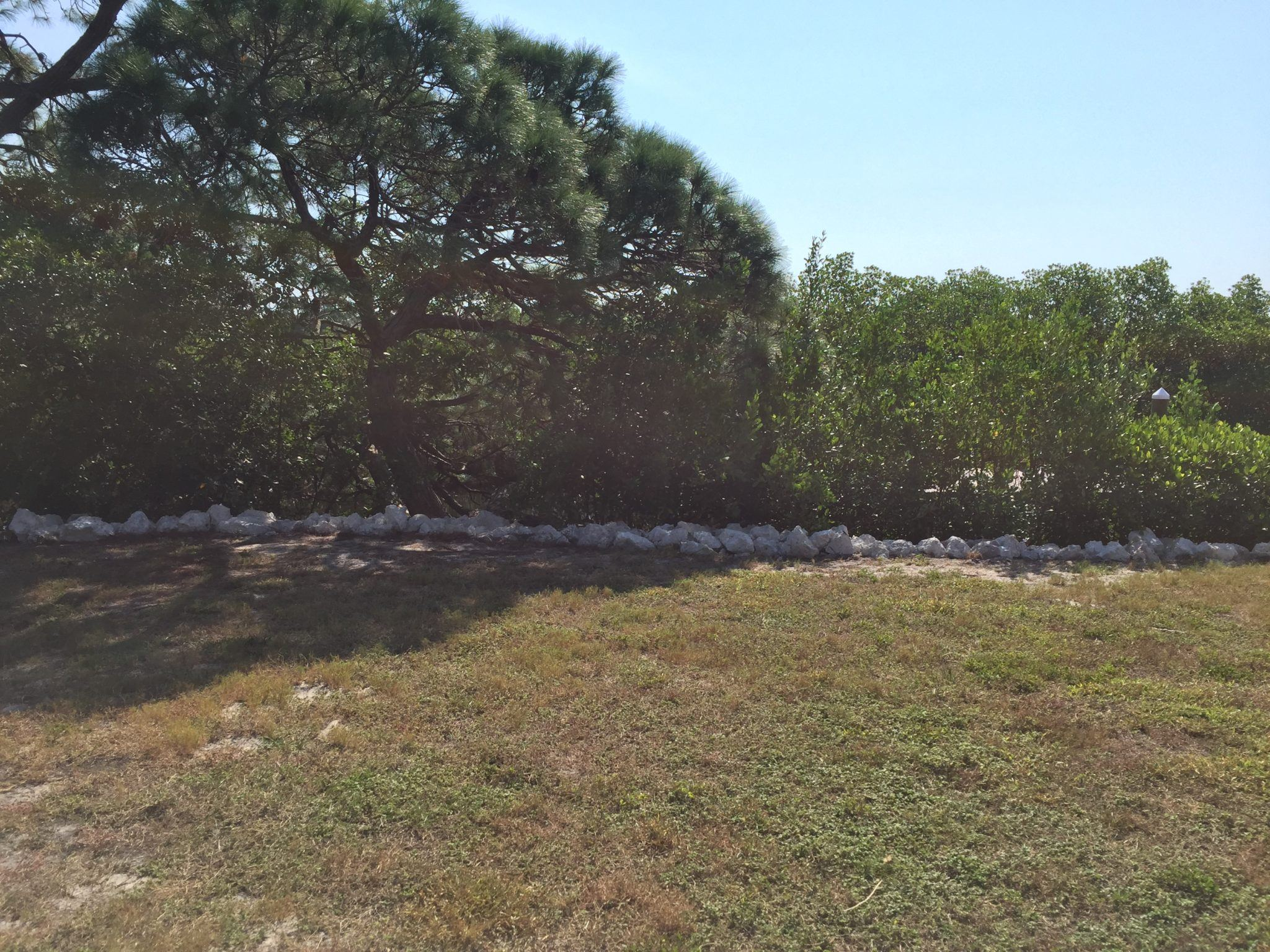 Rip rap limestone rock placed along shoreline for stabilization with mangroves and large tree behind the rip rap