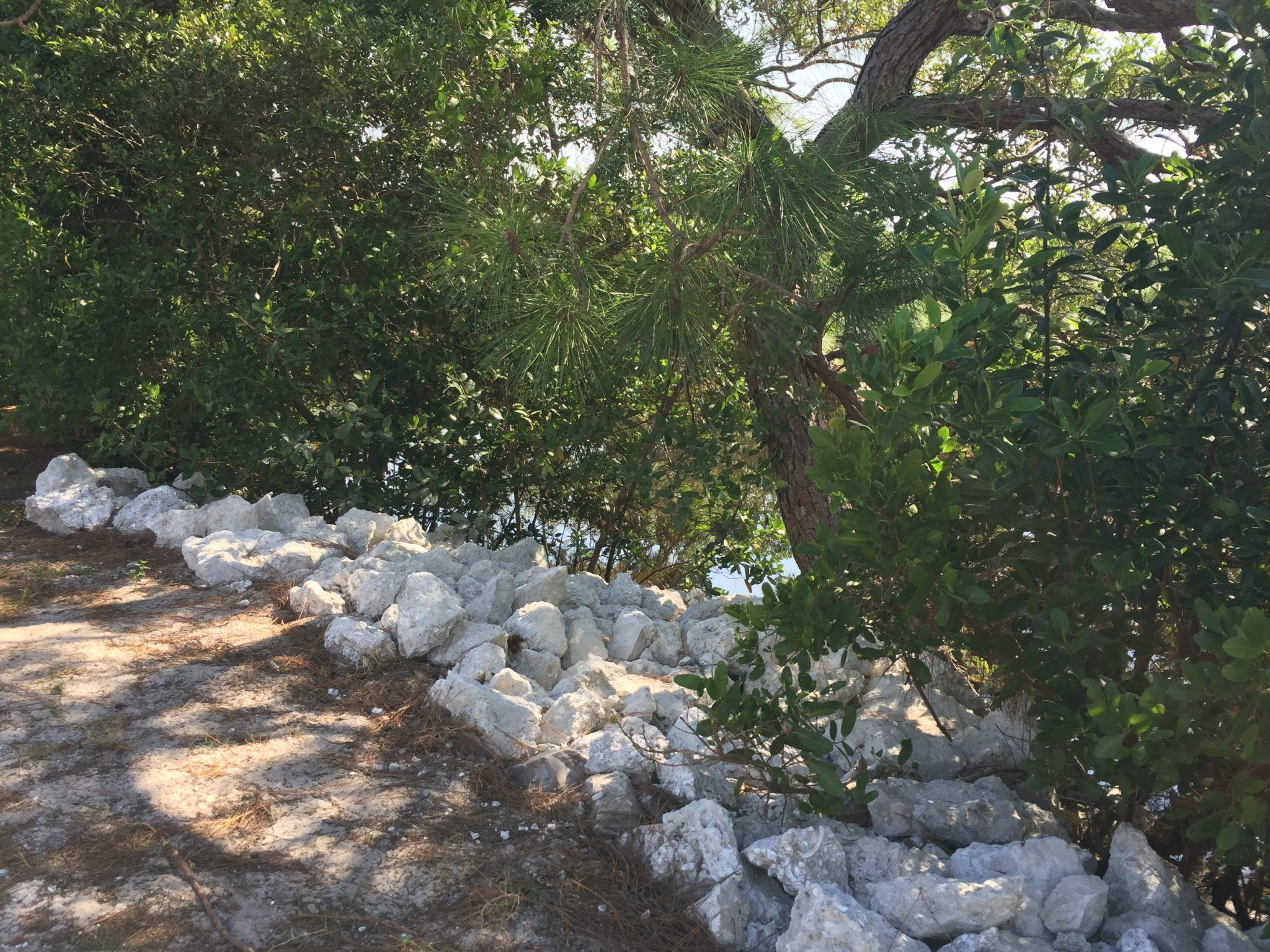 Limestone rock rip rap placed around mangrove bed for shoreline stabilization