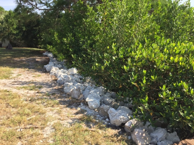 Small limestone rip rap rock placed along mangrove shoreline for stabilization